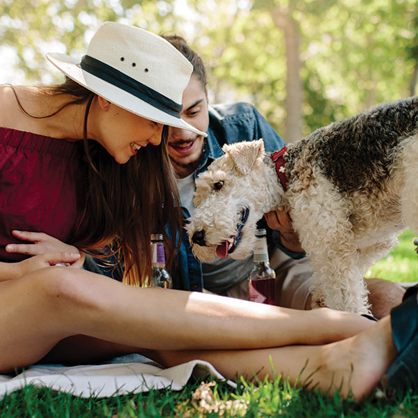 mystery-picnic-dogs-thumbs.jpg