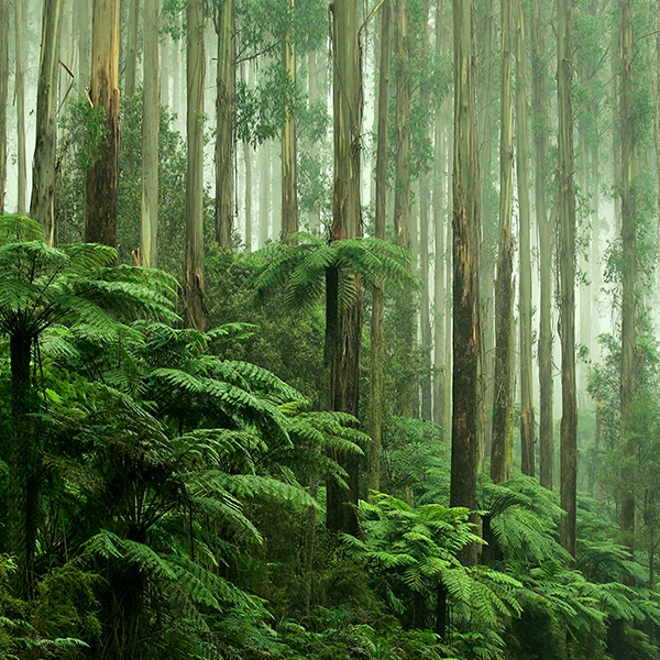Surprise Forest Date - Dandenong.png
