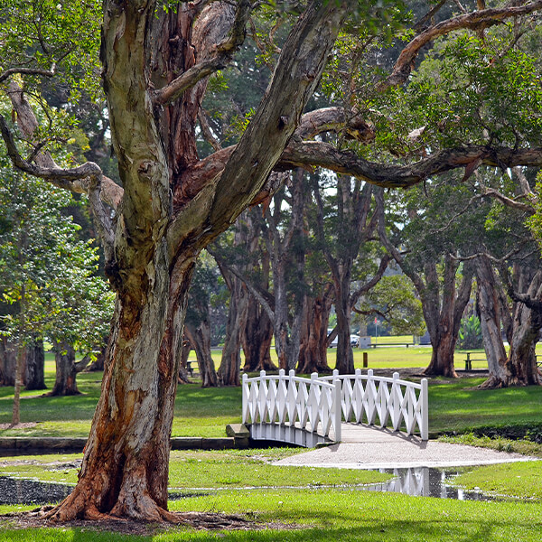 Sydney Mystery Picnic - Centennial Park.jpg