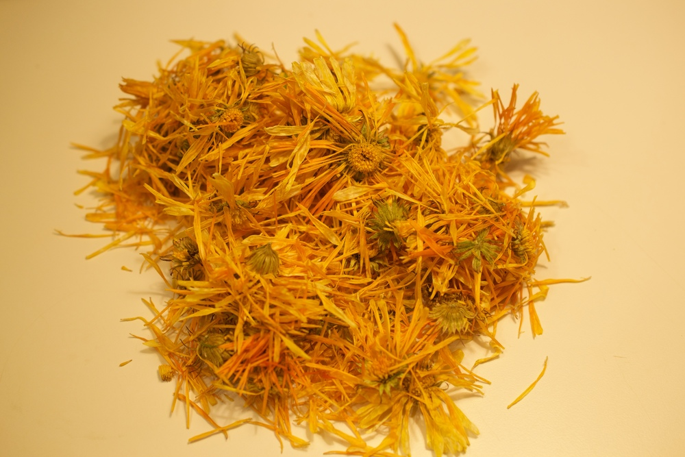 Dried calendula flowers can keep in a cool dark place for a while and can be used in teas, or infused in oil to make salves.