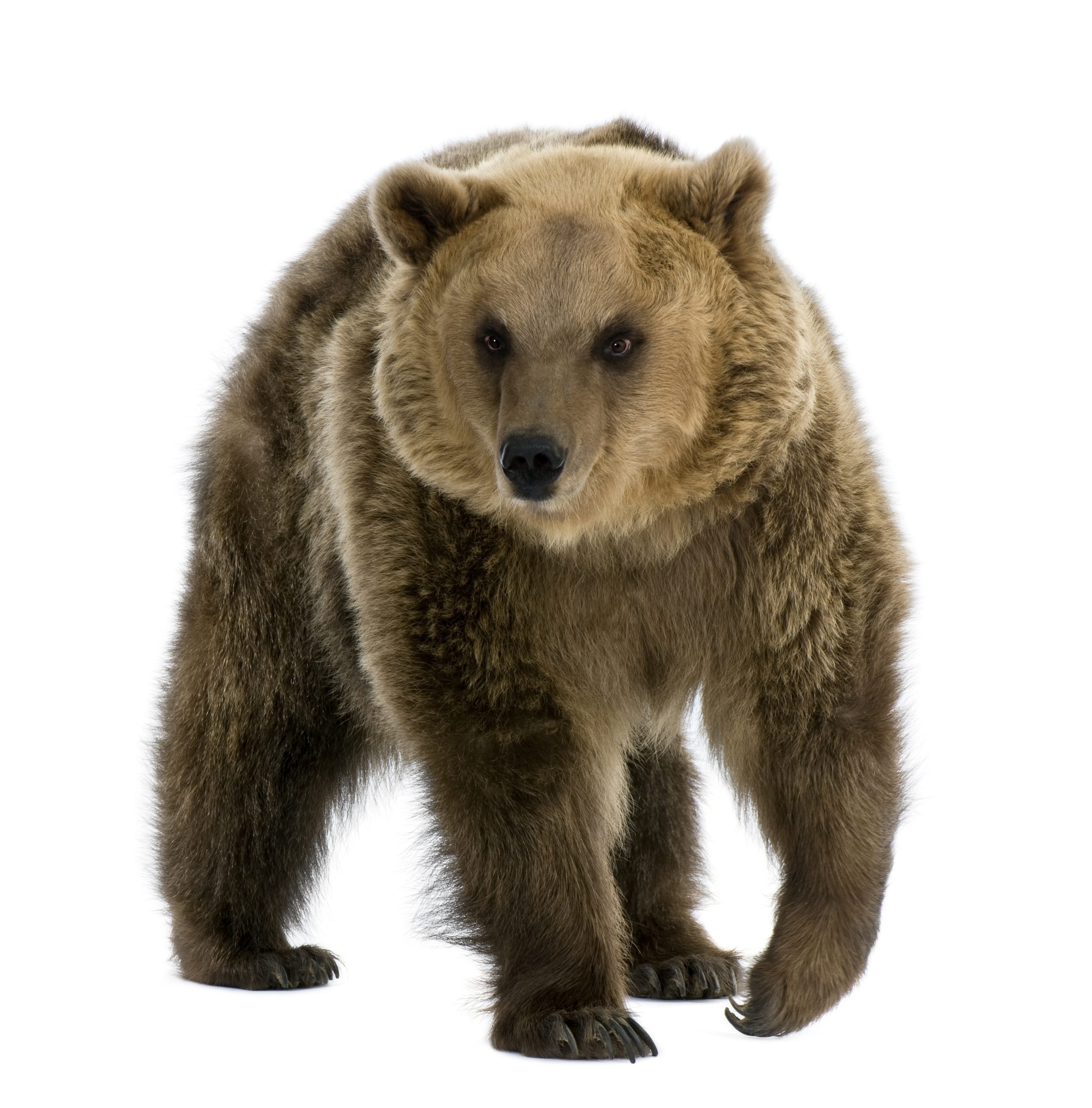 Great Bear Petroleum