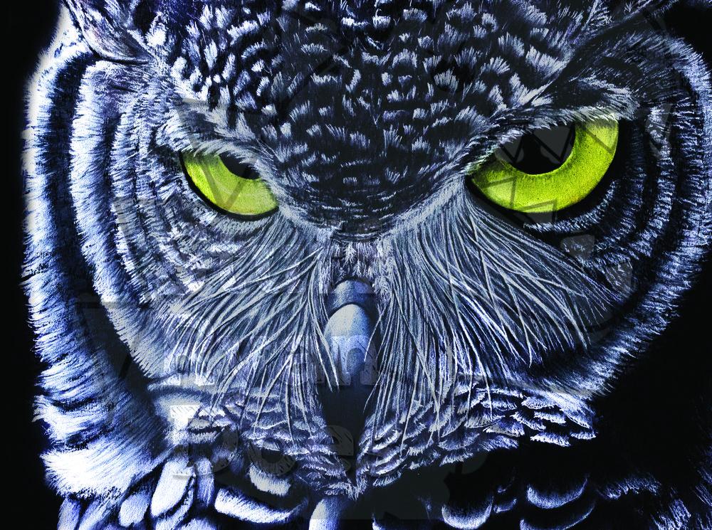 Owl WM.jpg