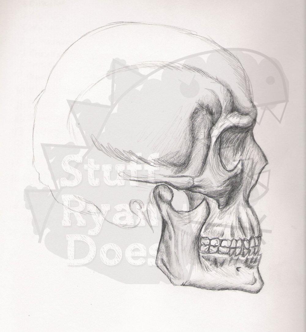 skull_by_rfever-dq744u.jpg