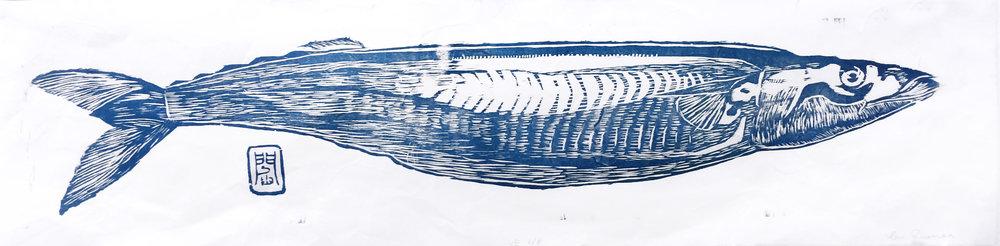 Blue Mackerel 秋刀魚