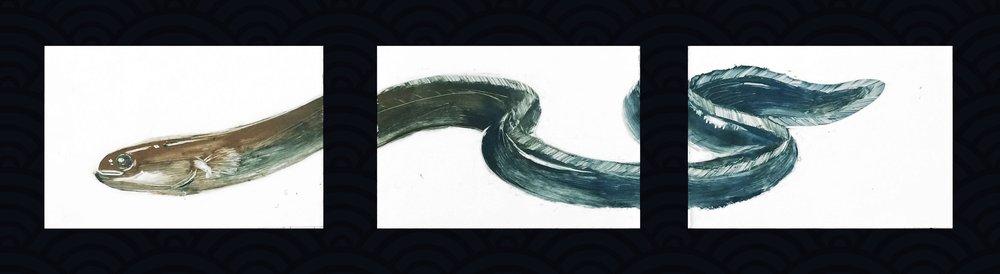 Eel 鳗鱼