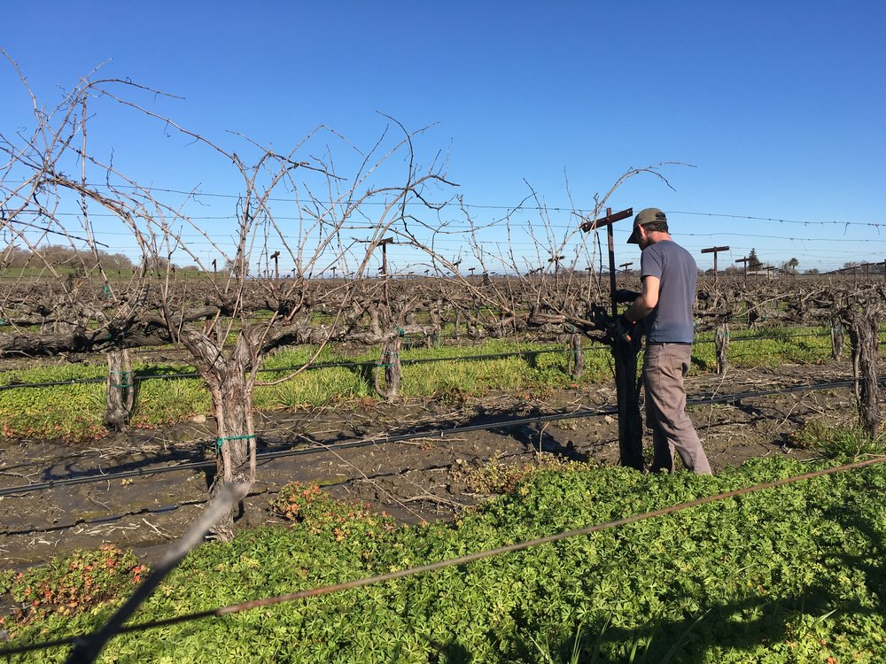 Jordy pruning