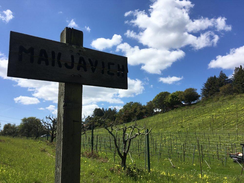 Makjavich Vineyard