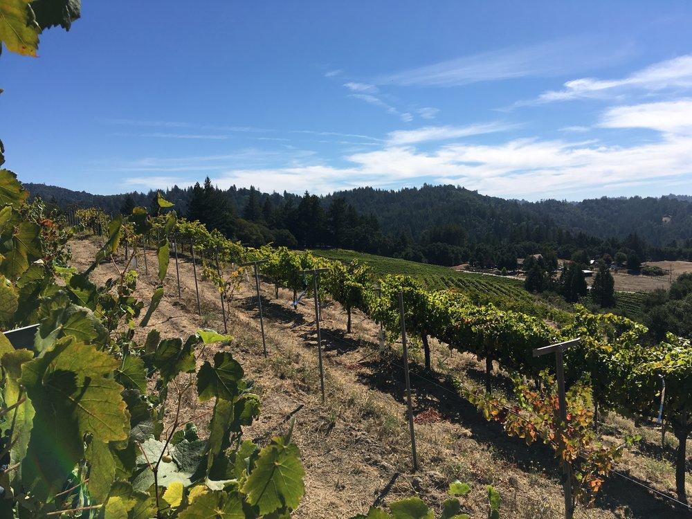 Zayante Vineyards