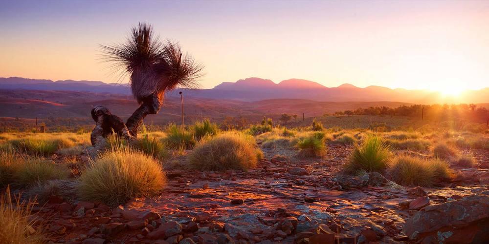 Willow Springs | Flinders Ranges