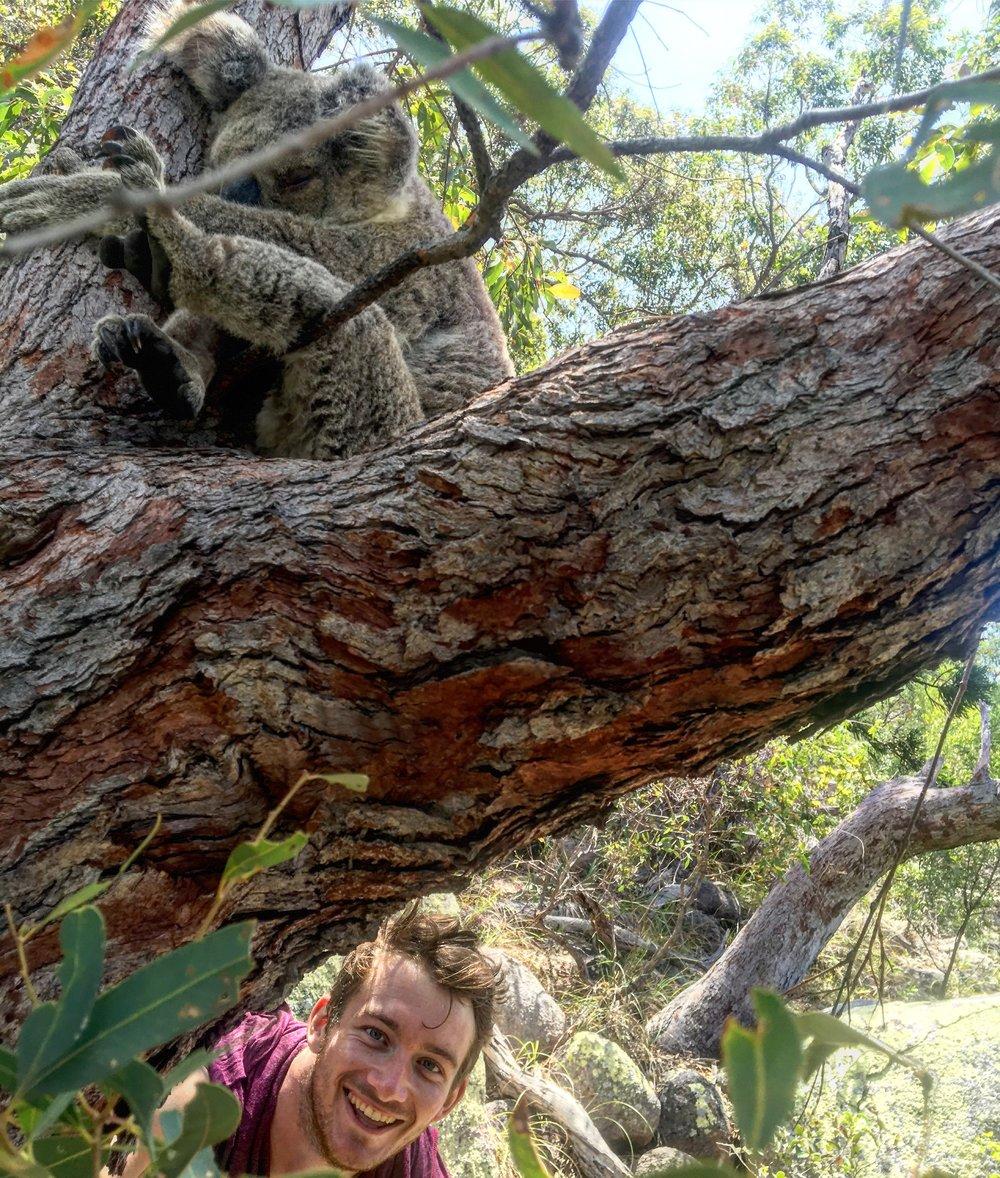Koala selfie - @lauriecrayston