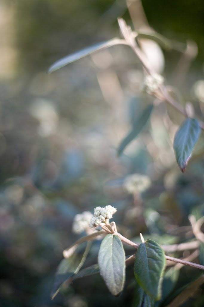 Nature, Revelry.