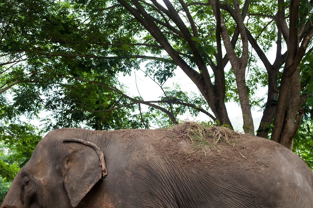 Photographs from the Amazing Elephant Sanctuary in Chiang Mai, Thailand