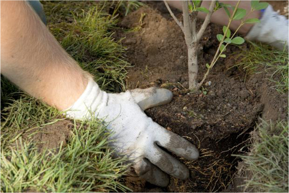 Plant, Shrub and Tree Services