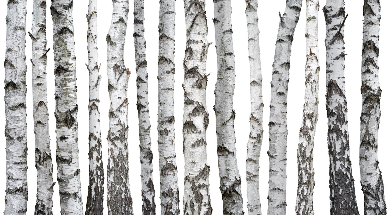 birch psychology