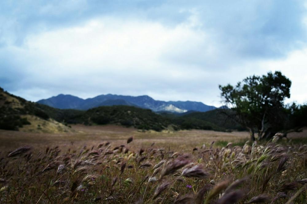 Warner Springs Meadows near Mile 103.