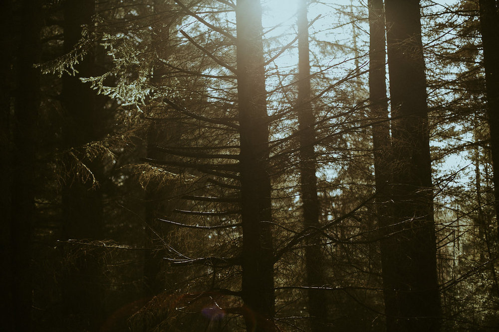 0004b_scottishforest.jpg