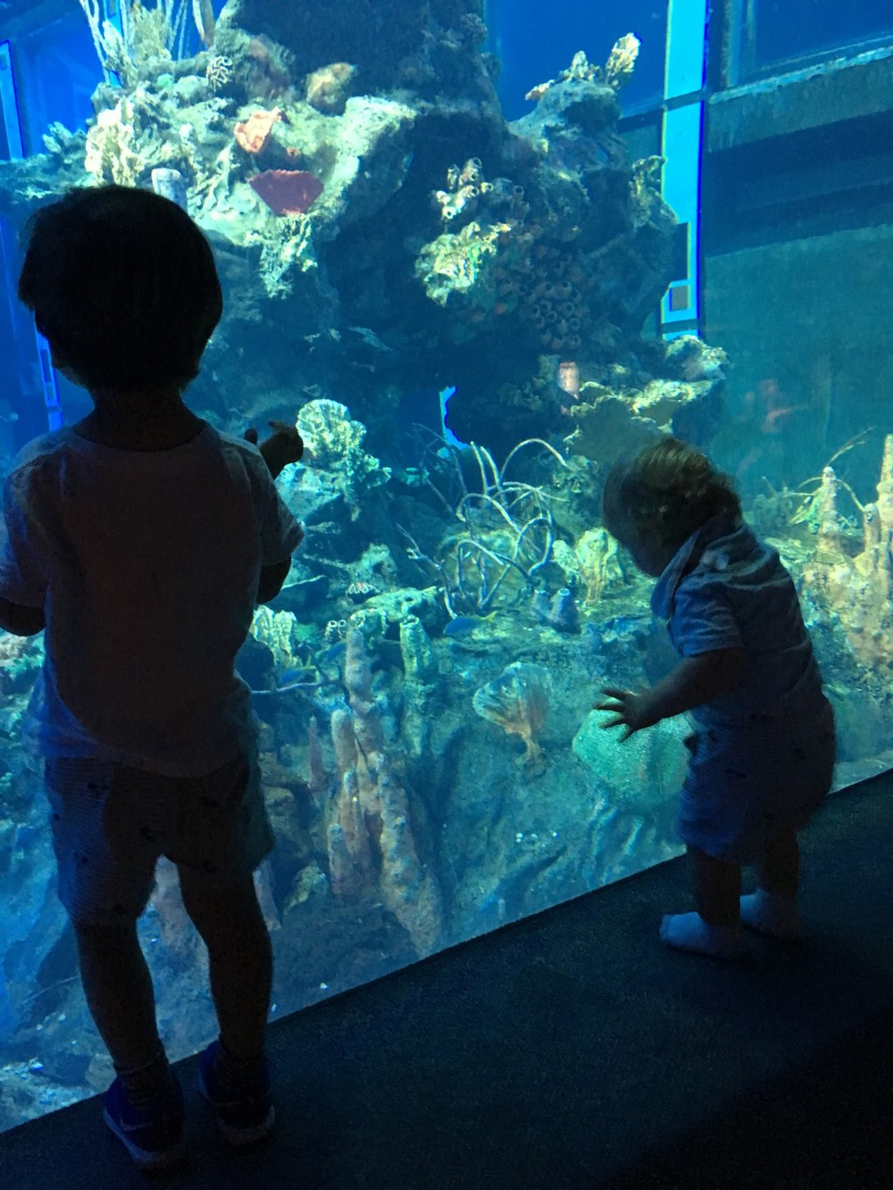 """Awesome aquarium when you get off of the """"Nemo"""" ride at Epcot"""