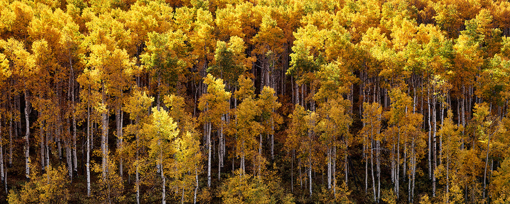 Light and Shadow in the Aspen