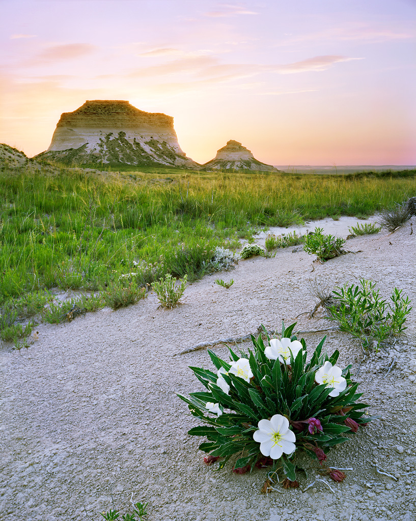 Pawnee Buttes and Primrose