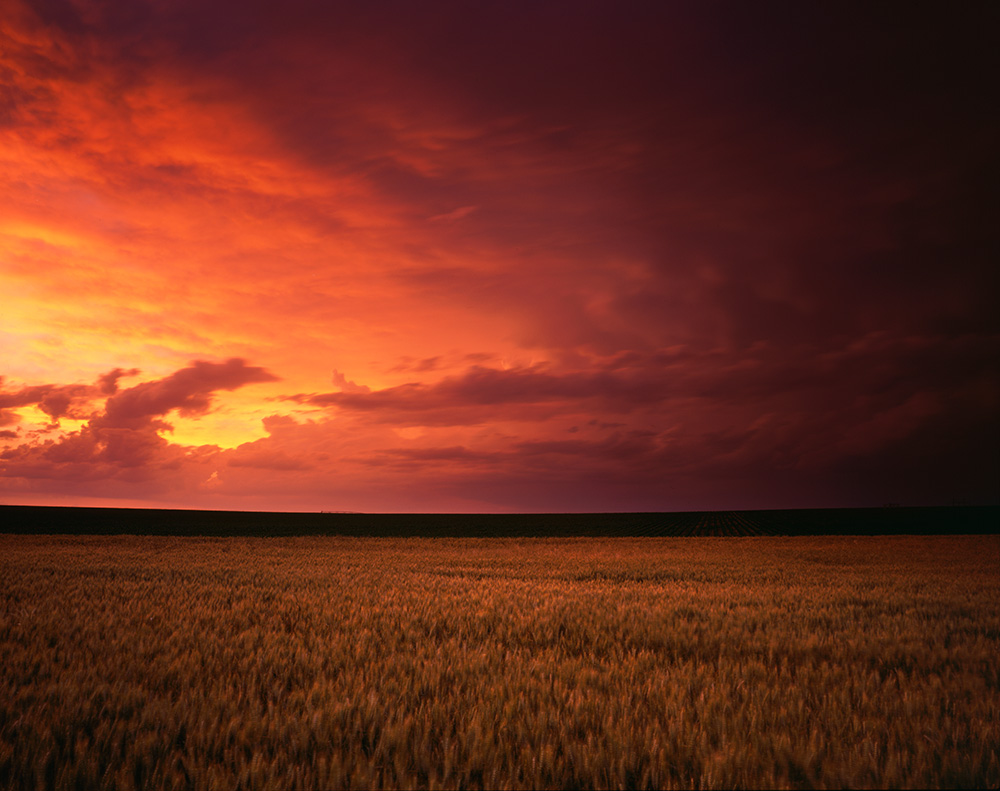 Wheat and Storm