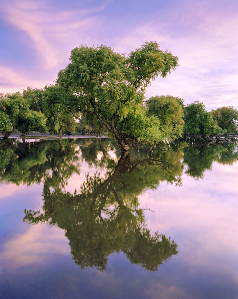Flooded Cottonwood