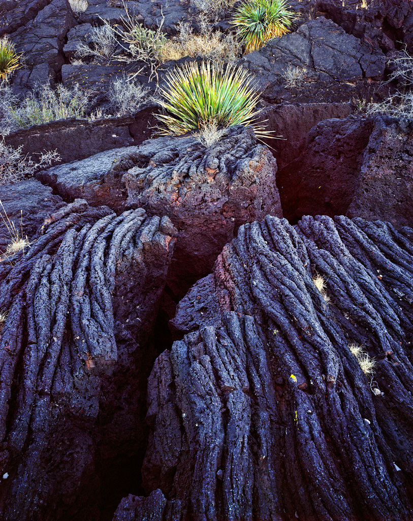 Yucca and Lava Flow