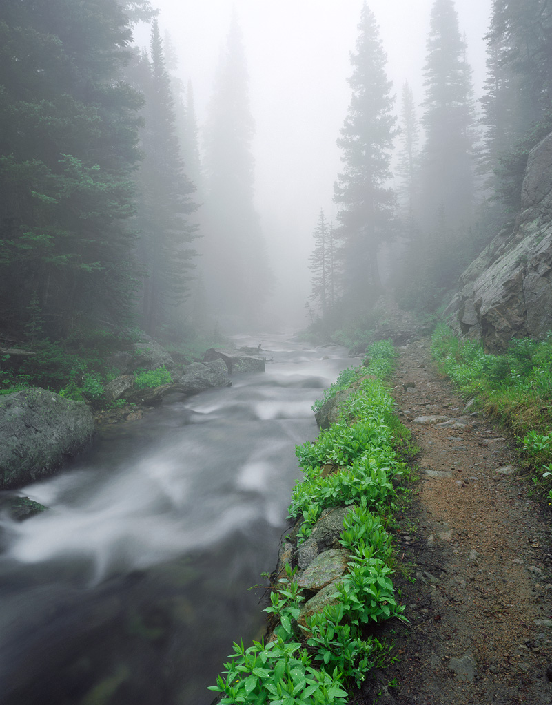 """Trail through the Fog"" - Fuji Pro 160NS example showing it's rich rendition of greens, rather unique for a negative film.  8 seconds at f32, polarizing filter."