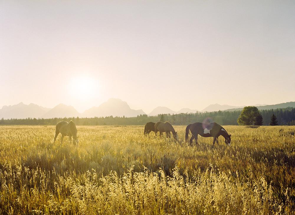 Teton Range Horses