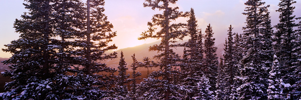 """Winter Pine Forest Glow"" - Prints available."