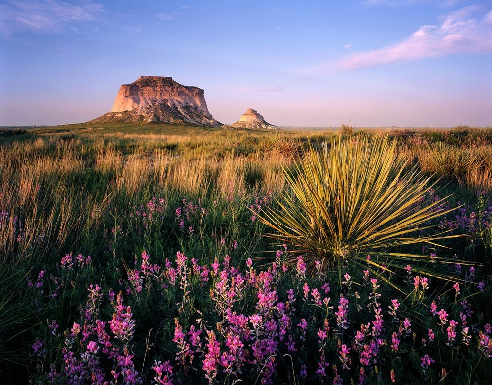 Pawnee Buttes and Wildflowers.  Prints available.