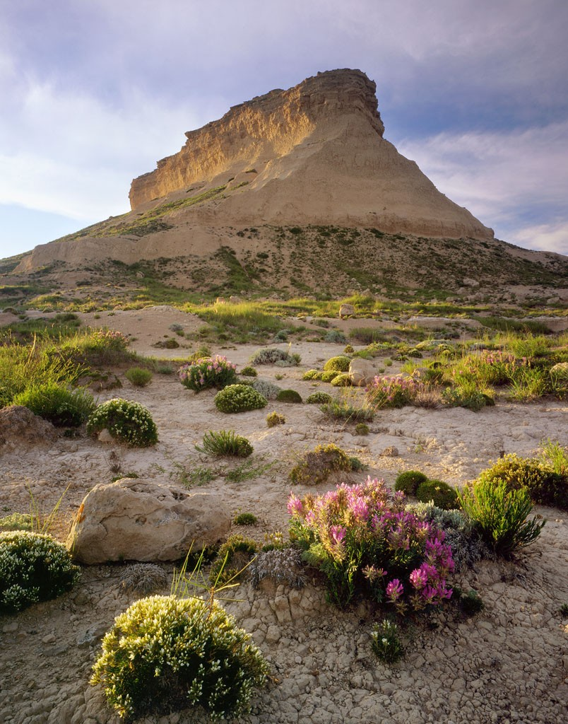West Pawnee Butte with wildflowers.