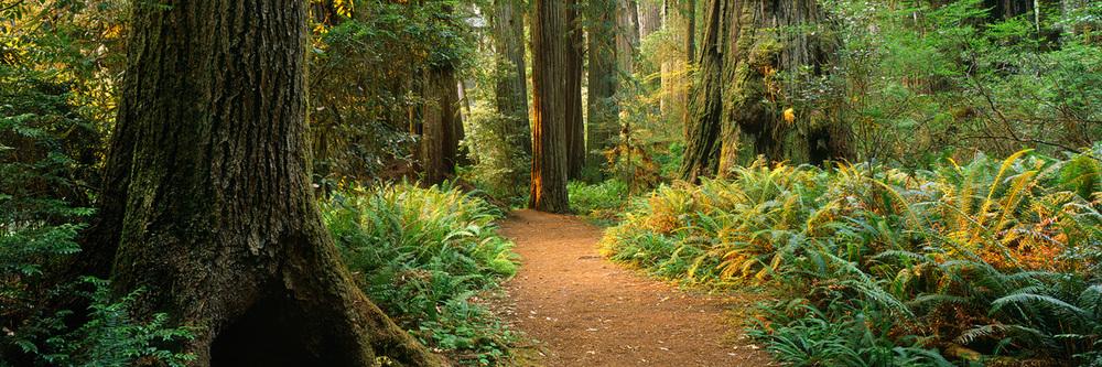 Go hike that trail!