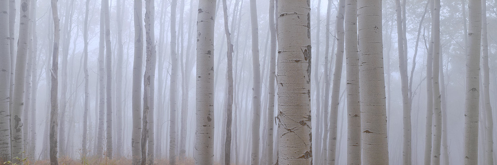 """Aspen in the Fog"" – A ghostly aspen forest under a thick veil of fog.  This was like nothing I had ever seen before, the forest was so incredibly peaceful and quiet as the evening light continued to fade.  Prints available."