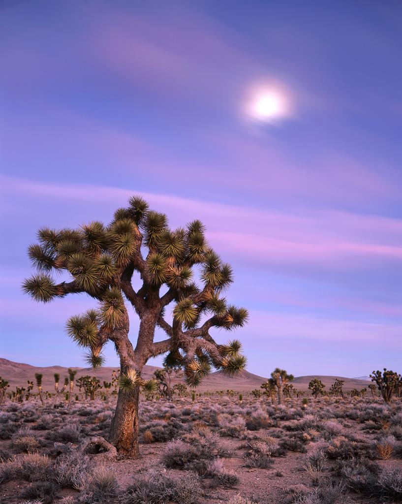 """Joshua Tree Moonrise"" – Prints available"