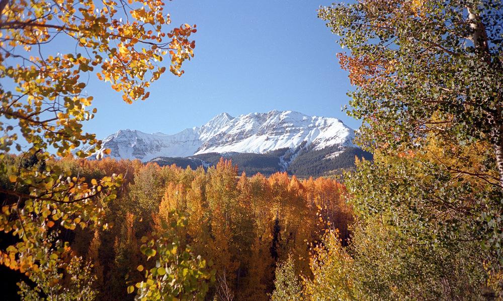 Wilson Peak through the aspen