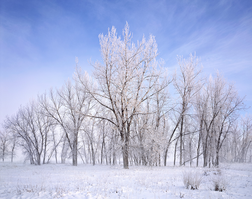 """Cottonwood Frost"" - Provia 100f 4x5, 90mm lens.  1/2 second at f32, no filters"