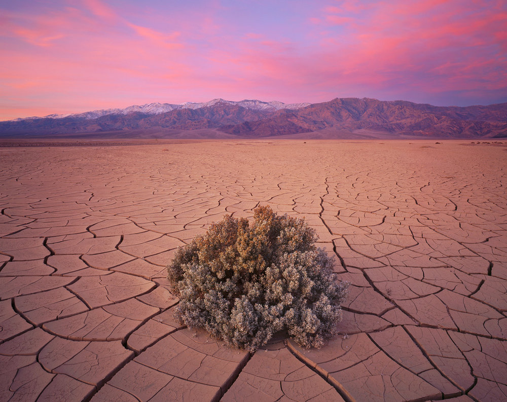 """Cracked Earth and Bush"" - A lone bush stands on a huge expanse of cracked earth mud tiles.  Sunrise colors pour down from the sky into the barren land.  Prints Available."