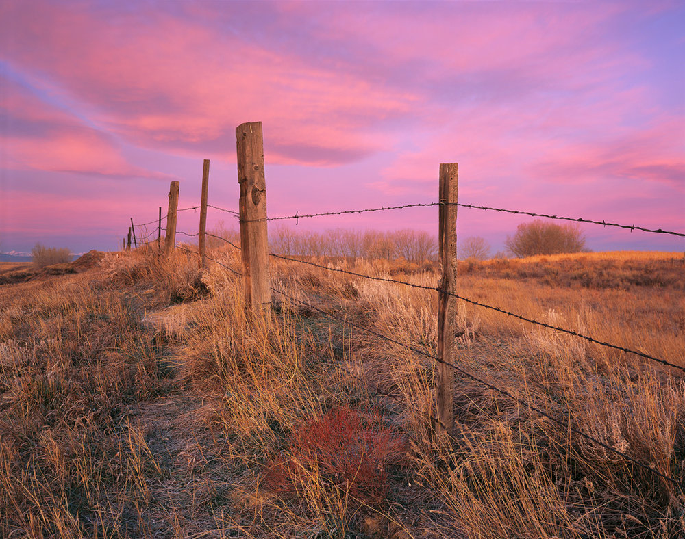 """Barbed Wire Sunrise"" - Vibrant sunrise hues fill both the sky and winter grasses along a fence on the plains of Colorado.  Prints Available."