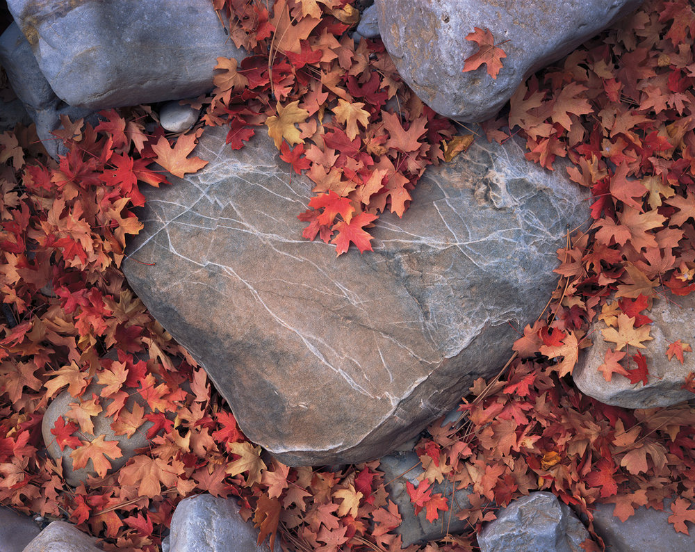 """Heart of Stone"" - Fallen maple leaves fill a dry riverbed, leaving a clear shape of a stone heart emerging from the ground.  Prints available."