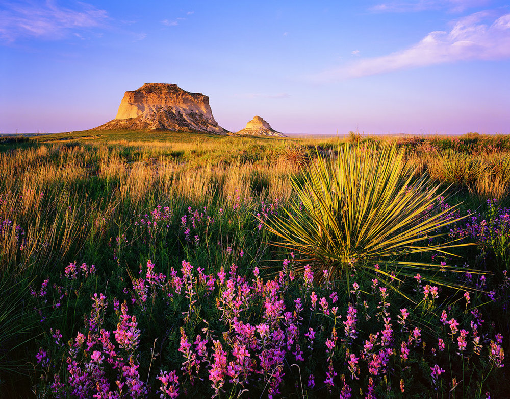 """""""Pawnee Buttes Wildflowers"""" - An image that makes good use of front tilt to get everything in focus from then nearest flowers to the distant buttes. Toyo Field 45A II, Ektar 100 4x5, 90mm Caltar Lens - 1/2 second at f22, 1 stop soft GND filter"""