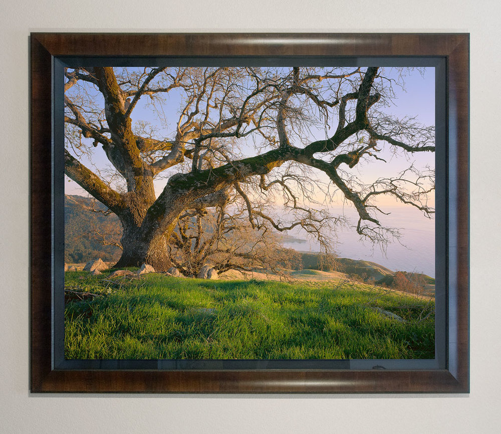 """Coastal Oak"" - 40x50"" premium framed print"
