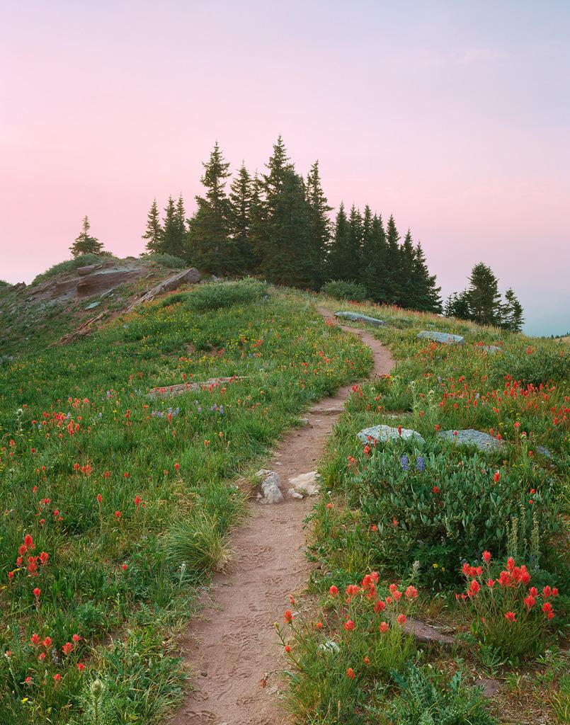 """Shrine Ridge Trail"" - Flowers line a ridge-top trail in morning light. Prints Available."