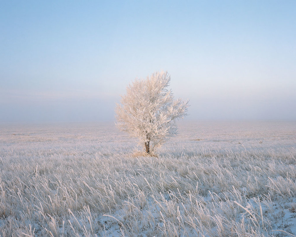 Frosty Solitude