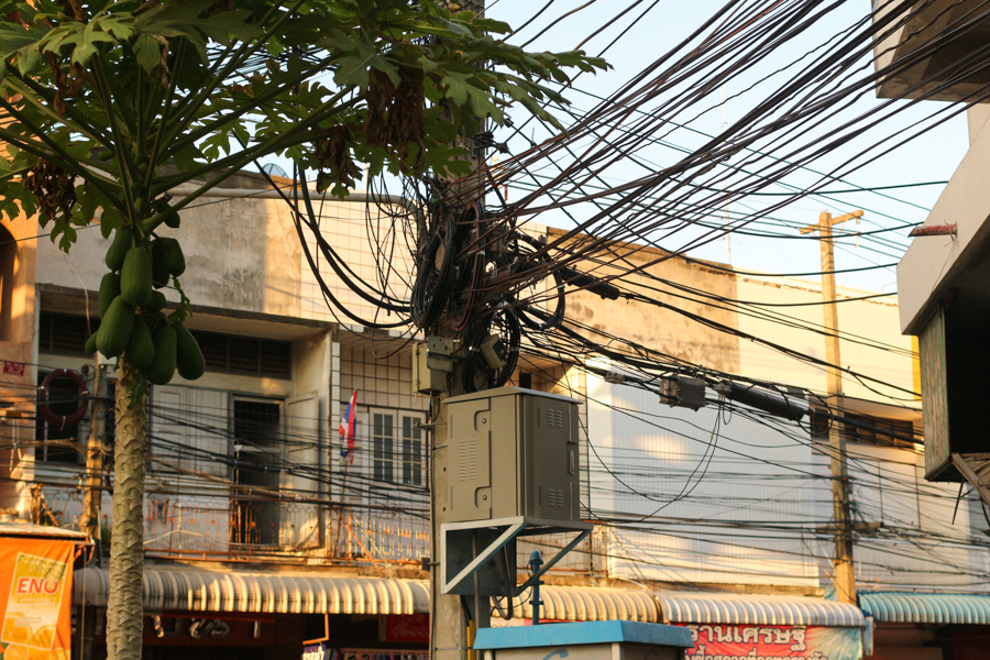 Papaya tree and cabling, a productive urban landscape, Chiang Mai