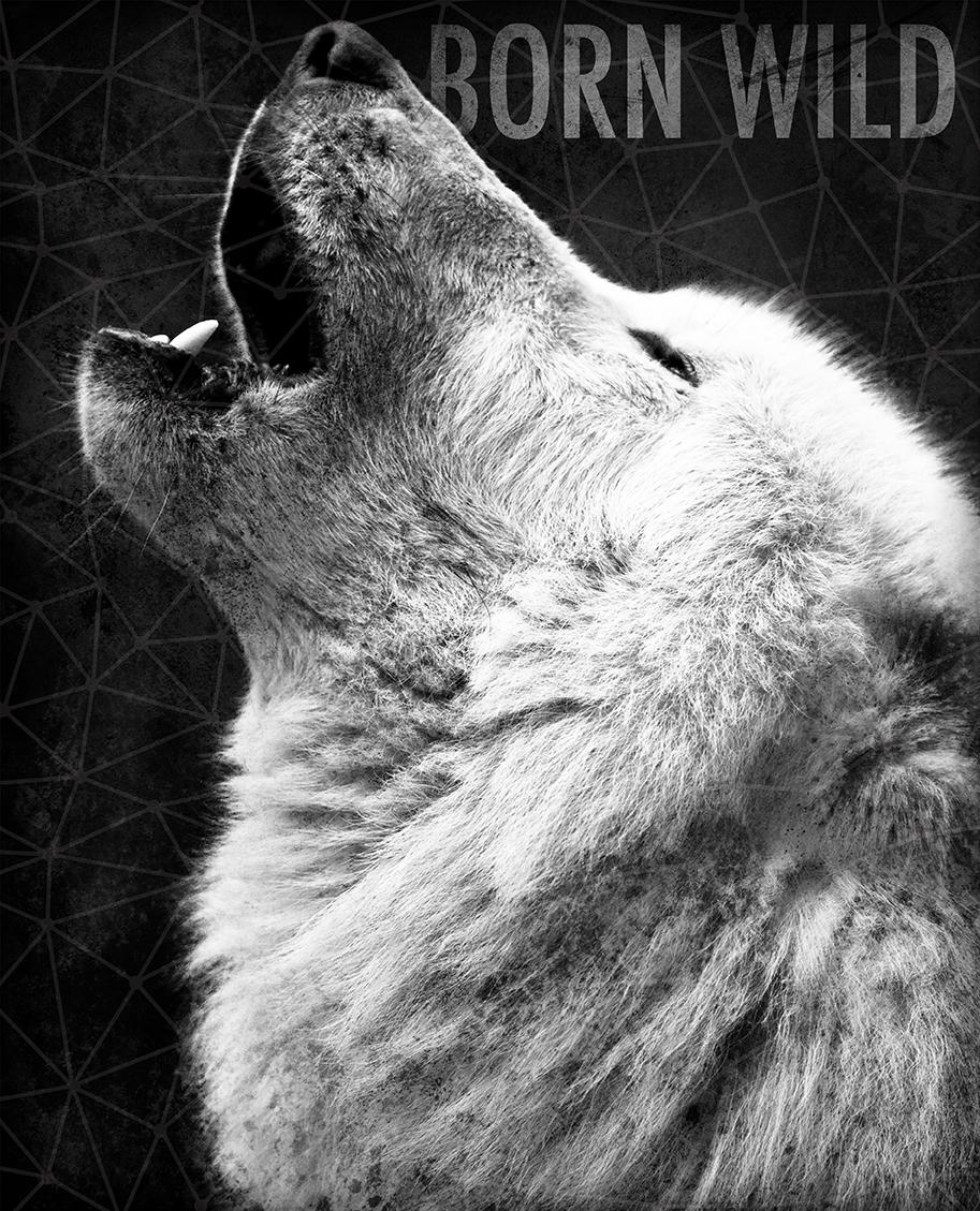 wolf_photo.jpg