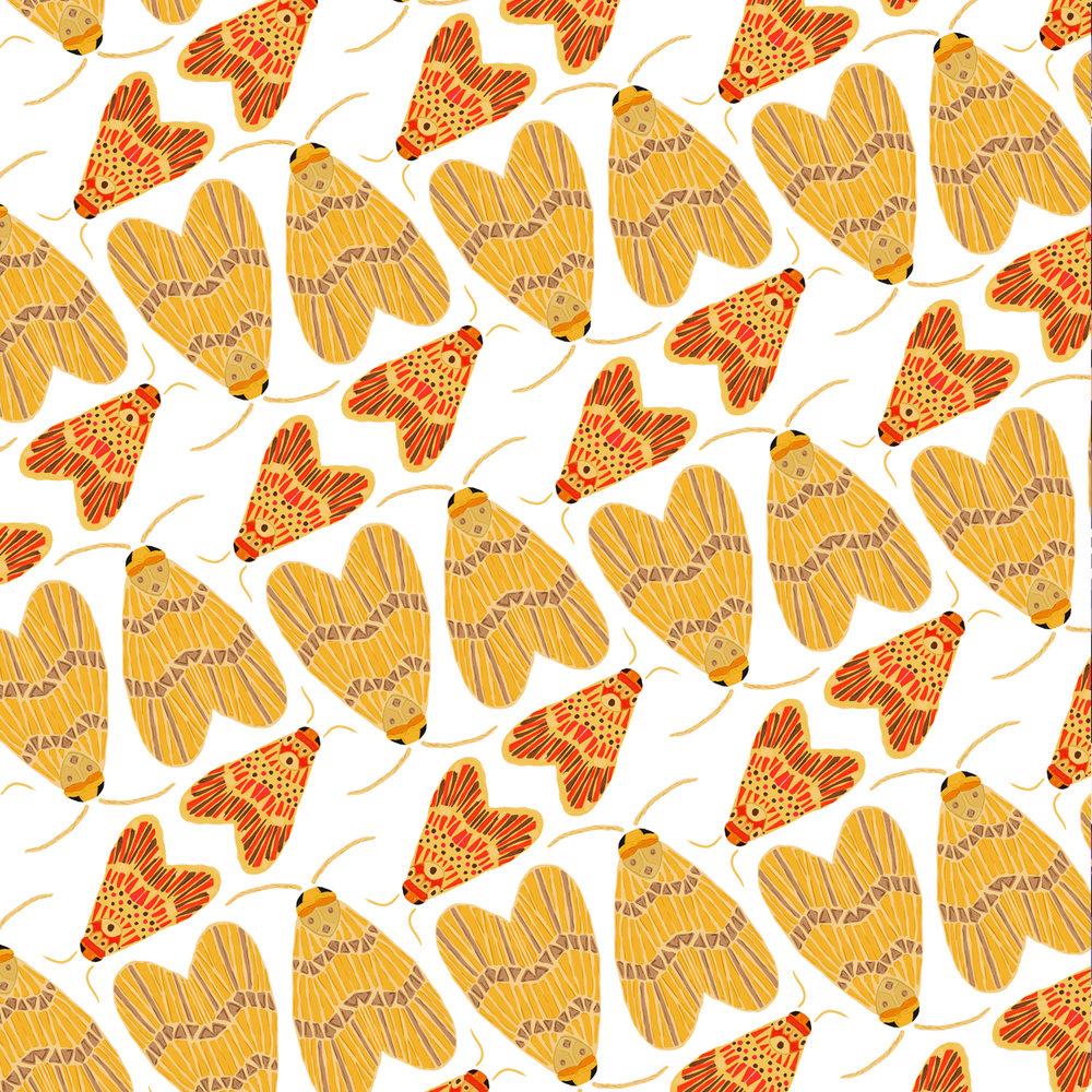 katiekerpel_moths.jpg