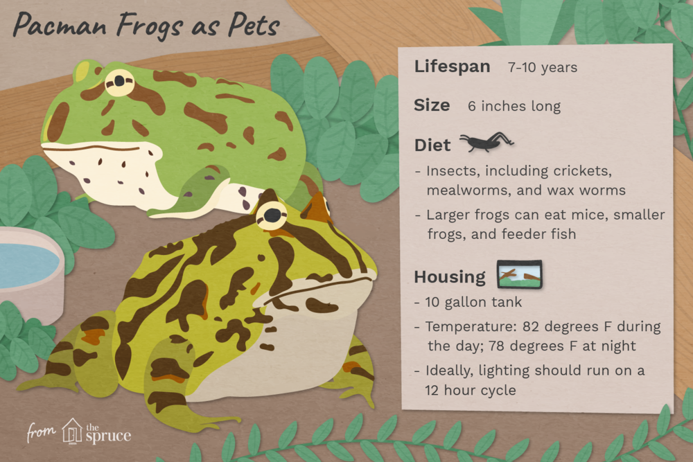 pacman-frogs-as-pets-1236716_final-01.png