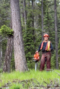 Falling of the first Community Forest tree on June 8, 2005
