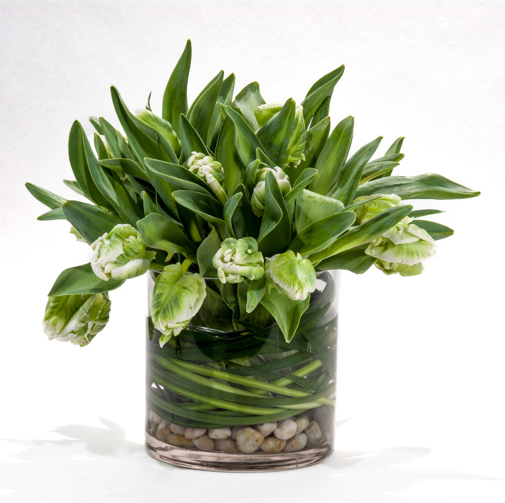 Green tulips - full size hi res-1.jpg