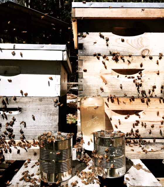 """Spring settling in their new  Langstroth  hives - outside sugar water feeder until the new colony can forage enough nectar to feed and start ""making"" honey for themselves. Note the left over sugar water tin cans used during their transportation in the ""bee package""."""